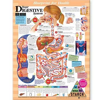 Blueprint for health your digestive system chart 20 x 26